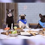 Ce restaurant New-yorkais propose un steak pour votre chien à 42$
