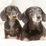 Le premier chien britannique cloné rencontre son double génétique