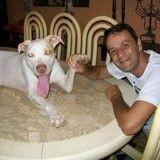 La bouleversante métamorphose de Davi, un Pit Bull sauvé de la mort