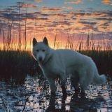 Un chien magnifique et des paysages superbes : prenez le temps d'admirer ces photos !