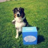 Gagnez une Woufbox ou une Miaoubox pour votre chien ou votre chat !