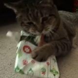 Le Père Noël est passé pour ces chats… très heureux d'ouvrir leurs cadeaux ! (Vidéo du jour)