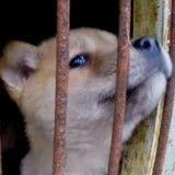 Sauvé des fermes à viande, ce chien au triste passé est plus heureux que jamais