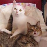 La touchante histoire de Trip et Yoga, deux chats handicapés inséparables