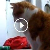 Ce chat adore faire du yoga avec son humaine (Vidéo du jour)