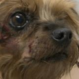 Un homme armé vole un vieux chien malade en pleine rue