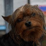 Un homme se sacrifie pour sauver son chien de la noyade