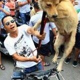 Yulin festival : la consommation de chiens et de chats ancrée dans les coutumes locales