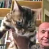En pleine réunion sur Zoom, un politicien attrape son chat : la suite glace le sang de ses collègues