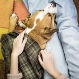 Zoonoses : les maladies transmises entre l'animal et l'homme