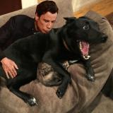 Un chien protège un chat pendant une tempête, sa photo fait le tour du web