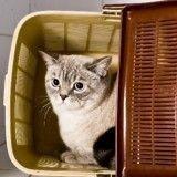 Votre chat est stressé ? Wamiz vous offre la solution !