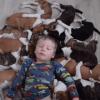 La vie trépidante d'une famille qui héberge 16 chiots ! (Vidéo du jour)