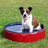 Soldes : quel est le produit pour chien numéro 1 des ventes sur Amazon ?