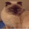 Un chat bientôt maire d'une ville de Sibérie ?