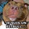 Le sourire ravageur de Meaty le féroce Pitbull est très contagieux ! (Vidéo du jour)