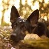 Le Panthéon des animaux accueille deux nouveaux chiens courageux