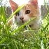 Puces, tiques : au printemps, protégez vos animaux !