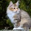Elle entend un chat et quand elle voit qui est en train de la poursuivre, elle fonce au commissariat de police