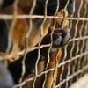 16 chiens libérés d'un élevage clandestin en Haute-Saône