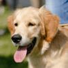 Deux enseignantes lancent un appel aux dons pour accueillir un chien d'accompagnement à la réussite scolaire