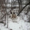 Cette chienne de 10 ans a survécu 17 jours dans la neige, un petit détail lui a sauvé la vie