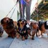 5 races de chiens les plus populaires sur Instagram