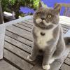 Citronnelle, la chatte dont les moustaches font craquer le monde entier !