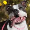 Une chienne réunie avec sa famille un an après avoir été volée