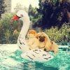 Les photos improbables du sosie canin de Taylor Swift