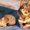 Istanbul veut s'occuper des chiens et chats errants de sa ville