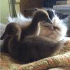 Et voici Gus, le chat ronchon dont les meilleurs amis sont des canards !