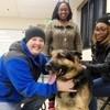 Leur chien Berger allemand est kidnappé : après 3 ans sans nouvelle, un appel bouleverse toute la famille