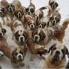 Vous adorez les Saint Bernard ? Cette île aux chiens est faite pour vous