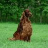 Un chien primé empoisonné lors de la plus grande exposition canine du monde ?