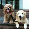 Ce chien aveugle a son propre chien guide ! (Vidéo)