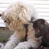Ces deux chiens passent leur temps à s'occuper de bébés animaux (Vidéo du jour)