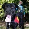 Migaloo, le premier chien archéologue