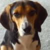 Sa petite-amie lui demande d'abandonner son chien, sa réaction est hilarante !