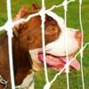 Il voit un chien attaché dans un parc, s'approche et n'en croit pas ses yeux