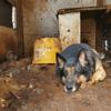 Après une vie misérable, ce chien va faire taire toutes les idées reçues sur les chiens maltraités
