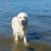 En pleine balade, son chien se précipite vers une ombre dans l'eau. Quand il ressort, tout le monde applaudit !