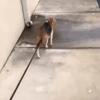 Elle croise une chienne errante, un détail la frappe et elle sort une laisse
