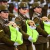 Pendant le défilé militaire chilien, tous les projecteurs étaient braqués sur… des chiots (Vidéo)