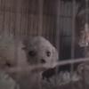 Chiens enfermés 24h/24 dans des cages : la porte s'ouvre et ce qui arrive est bouleversant (Vidéo)
