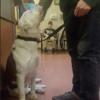 """""""Mon cœur a fondu"""" : ce chien se cramponne à son maître pour une raison absolument bouleversante (Vidéo)"""