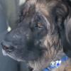 Un vétérinaire séquestre un chien pendant 6 mois pour prélever son sang