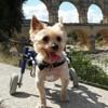 Elle adopte deux chiens malmenés par la vie et leur offre un nouveau départ