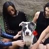 Cet adorable chien de refuge a eu droit à sa propre version du Bachelor