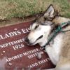 Dévasté après la mort de sa grand-mère, ce chien a une réaction bouleversante (Vidéo)